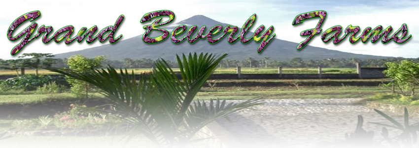 beverly_farms_banner